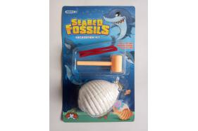 SEABED FOSSILS No.:TK065990